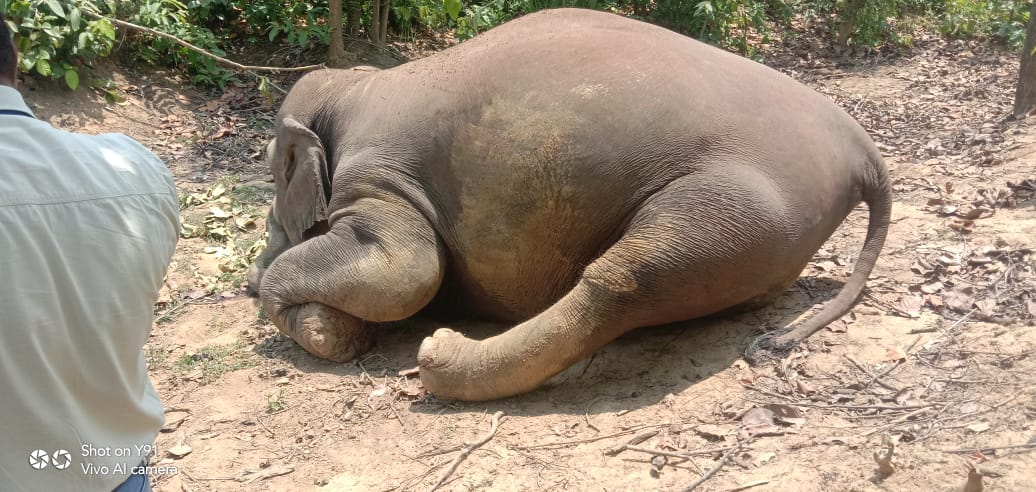 two-female-elephants-poisoned-in-chhattisgarh